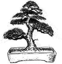 Estilos y tamaños en bonsái